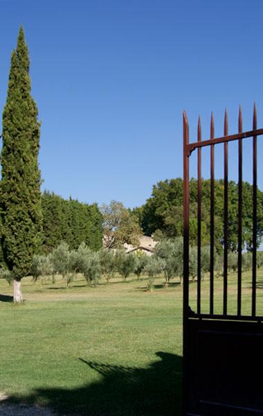 oliveraie à l'entrée du mas